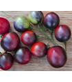 BIO rajčiak Indigo Blue Berries - Solanum lycopersicum - paradajka - semienka - 7 ks