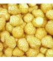 Jahoda mesačná Yellow Wonder - Fragaria vesca - semienka - 0,1 g