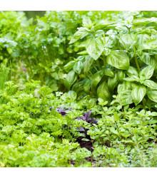 Aromatické byliny a korenie - zmes semien - semiačka - 0,5 g