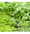 Aromatické byliny - zmes semien - semiačka - 0,2 g