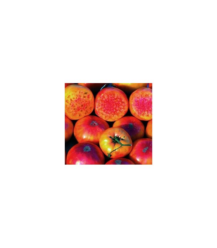 Paradajka dvojfarebná - semiačka - 6 ks