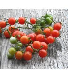 Divé paradajky - Solanum pimpinellifolium - Semiačka - 6 ks