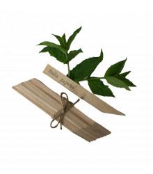 Menovky na označenie sadeníc - drevené - 10 ks v jednom balení