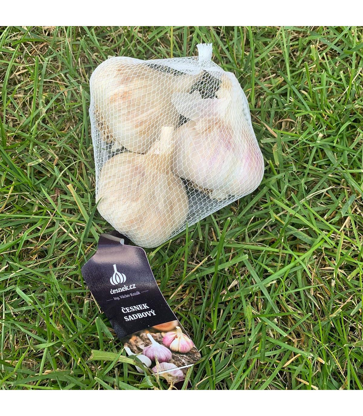 Sadbový cesnak Havel - Allium sativum - paličiak - predaj cibulí cesnaku - 3 ks