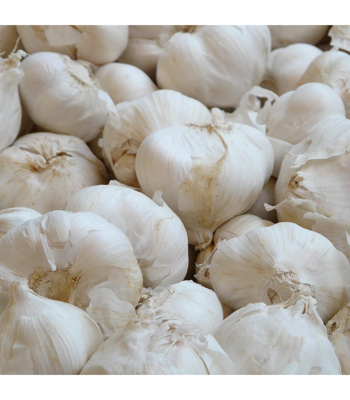 Sadbový cesnak Lukan nepaličiak - Allium sativum - predaj cibulí cesnaku - 3–4 ks