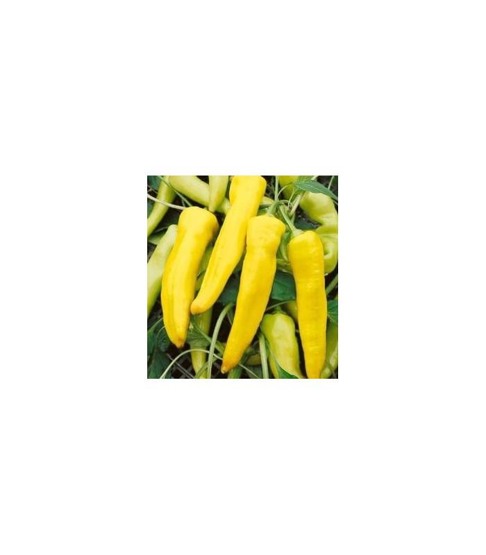 Paprika Sladký banán - Capsicum annuum - semiačka - 9 ks