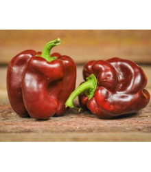 Paprika hnedá - Semiačka - 9 ks