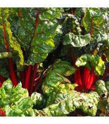 Mangold stopkatý červený - Beta vulgaris - semiačka - 75 ks