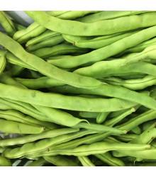 BIO Fazuľa kríčková Maxi - Phasseolus vulgaris - BIO semiačka - 20 ks