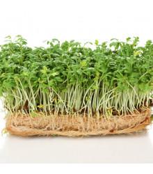 BIO žerucha Kresso - BIO semiačka - Lepidium sativum - 150 ks