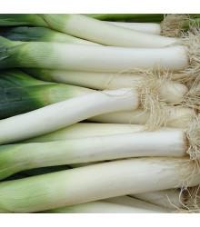 Pór - Carentan - Allium porrum - semiačka - 500 ks