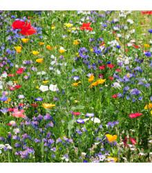 Letničky zmes - divé poľné kvety - semiačka - 0,9 gr