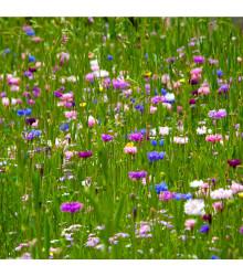 Letničky zmes - Japonská záhrada - semiačka - 0,9, g