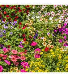 Letničky zmes Vysunuté záhrady - semiačka - 0,9 gr