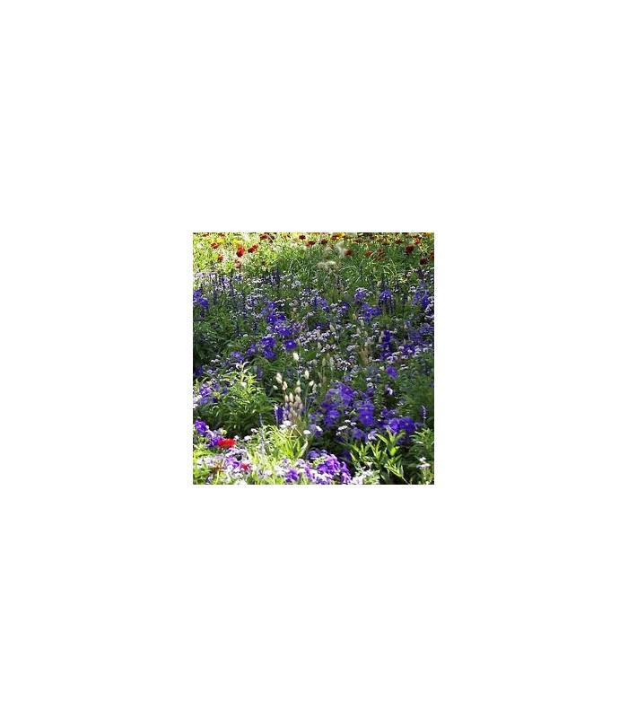Letničky zmes Záhradný sen v modrom - semiačka - 0,9 gr