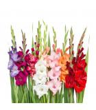 Jarné cibuľoviny