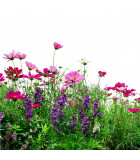 Kvetnaté lúky