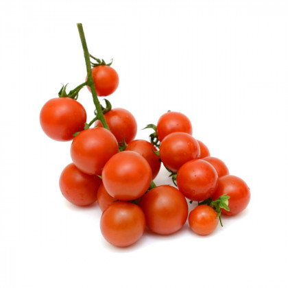 Divé paradajky