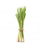 Citrónová tráva