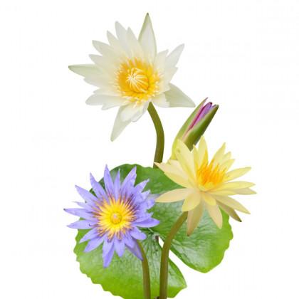 Vodné a bahenné rastliny