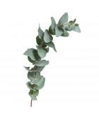 Eukalyptusy